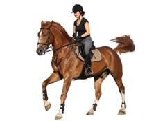 Entretien du cheval - Accessoires
