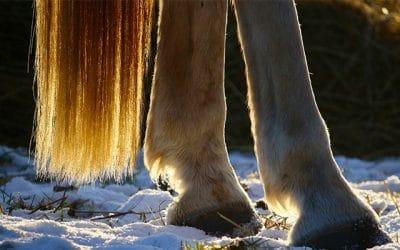Comment soulager les pieds, crins et sabots de mon cheval ?
