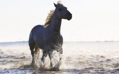Comment améliorer les performances de mon cheval ?
