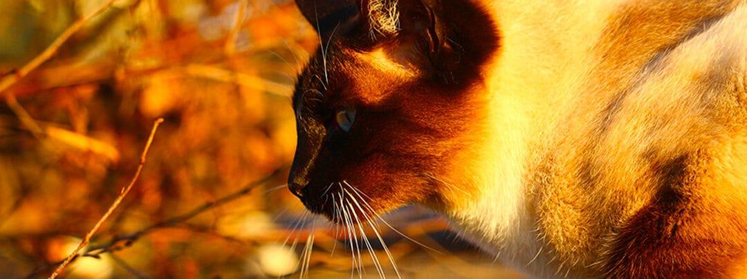 Préparer son chat à l'automne
