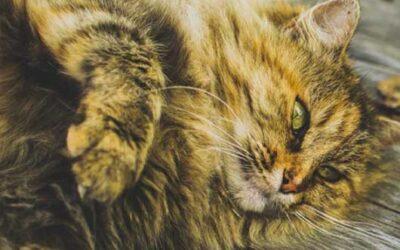 Traiter et prévenir les troubles digestifs de votre chat