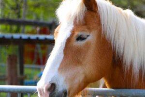 maladie respiratoire cheval