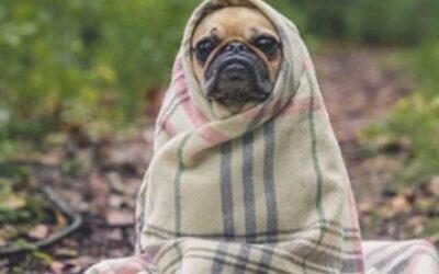 Hiver: Protection du chien vivant à l'extérieur