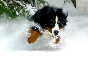 chien et neige