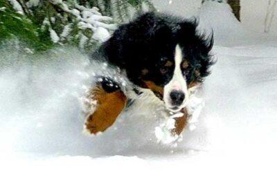 Protéger son chien du froid et de la neige