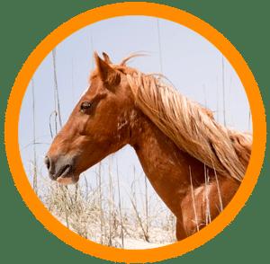 univers cheval