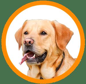 univers chien